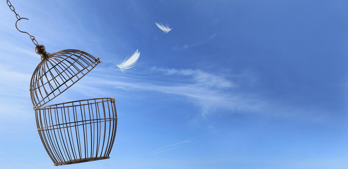Bird cage opened